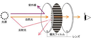 (写真1)偏光レンズの構造と仕組み。