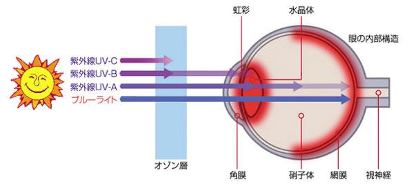(写真3)ブルーライト(青い光)は、網膜まで到達してしまうので、網膜の機能低下を引き起こすと言われている。