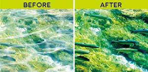 (左)通常の視界。(右)偏光ハイコントラストレンズを通した視界。image by JINS