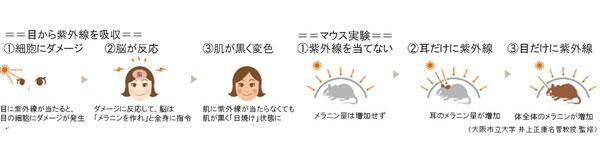 目から紫外線を吸収すると、脳がメラニンを作る指令を出して、肌が黒く「日焼け」状態に。 image by インターメスティック