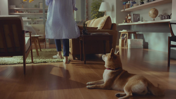 ソファに向かう波瑠さんを犬がじっと見つめる。