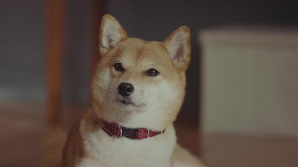 波瑠さんが野球中継に夢中になってしまい、犬は嫉妬してしまう。