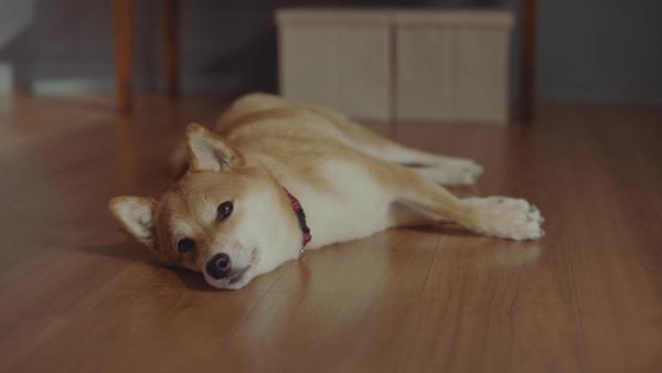 やきもちを焼いている犬の表情に注目。